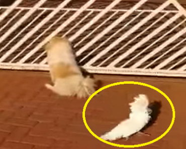 Bird Goes Viral for Being 'One of the Dogs', Enjoys Barking with Her Friends