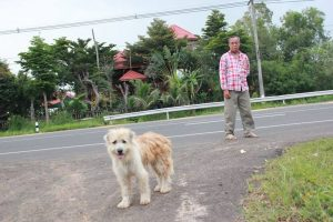 Lost Dog Refuses to Leave Roadside Spot, Gets Reunited with Owner 4 Years Later