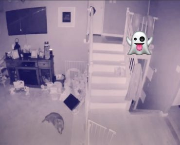 CCTV Allegedly Catches Moment a Ghost Child Plays with Ghost Dog