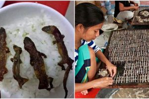 Vietnam's Roasted Lizard Rice Bowls are Popular Delicacy, But Netizens Feel Grossed Out