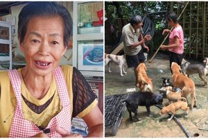 Old Woman Sells Food During the Day, Takes Care of 100+ Stray Cats and Dogs at Night