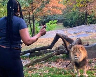 Woman Jumps into Lion Enclosure at Bronx Zoo, Teases the Lions with a Dance