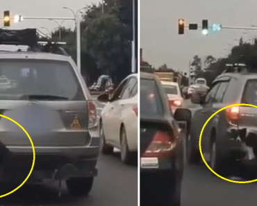 Netizens Angered by Guy Who Tied Dog at the Back of SUV as He Doesn't Want It Shedding in Car