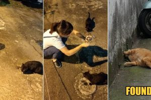 Woman Desperately Searching for Lost Pet Cat Finally Finds it after Asking Help from Stray Cat
