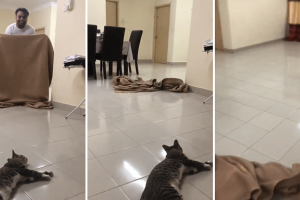 Cat Springs Up in Surprise as Human 'Disappears' in Magic Trick, Frantically Finds the Guy