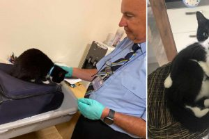 Couple Held at Airport for 'Suspicious' Luggage, Discovers Their Cat Hiding in the Bag