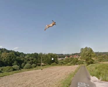 Netizens Solve Mystery of Incredible 'Flying Rabbit' in Google Maps Street View