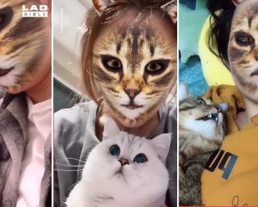 Cats React to New Filter, Netizens Express Amazement Over Cats' Intelligent Moves