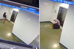 Man Saves Dog after Leash Got Stuck in Elevator Doors, Video Shows His Heroic Deed