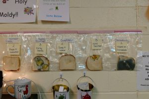 Hand Sanitizer is NOT a Good Alternative to Hand Washing, Student's Science Experiment Reveals