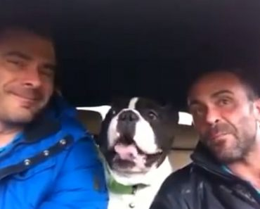 """Adorable Bulldog Goes Viral for Cute but Hilarious Cover of Josh Groban's """"You Raise Me Up"""""""