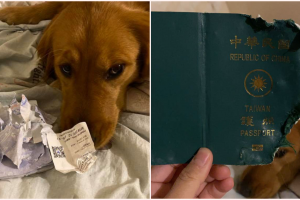 Pet Dog 'Saves' Woman's Life after Destroying Her Passport Before Wuhan Trip
