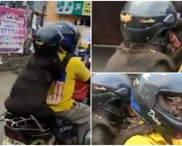 Dog Wears a Helmet While Riding a Motorcycle, Sparks Mixed Reactions