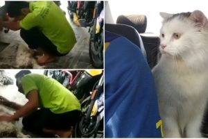 Man Breaks Down after Losing Pet Cat While He's at Work, Pet Lovers Cry with Him