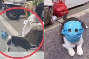 Concerned Owner Puts Modified Mask on Cat, Adorable Photos Go Viral