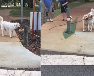 Supportive Dog Mom Runs to Help Daughter Carry a Giant Stick, Cute Video Goes Viral