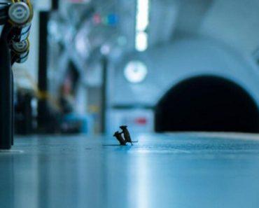 Photo of 'Boxing' Mice at London Subway Goes Viral, Wins LUMIX People's Choice Award