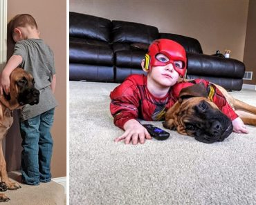 Loyal Dog Joins His Little Human in Time Out, Adorable Photo Goes Viral