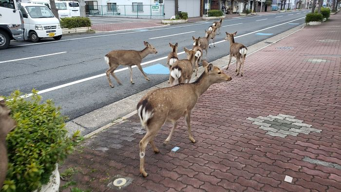 wild animals roam the city streets