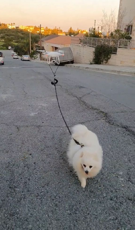 using a drone to walk the dog