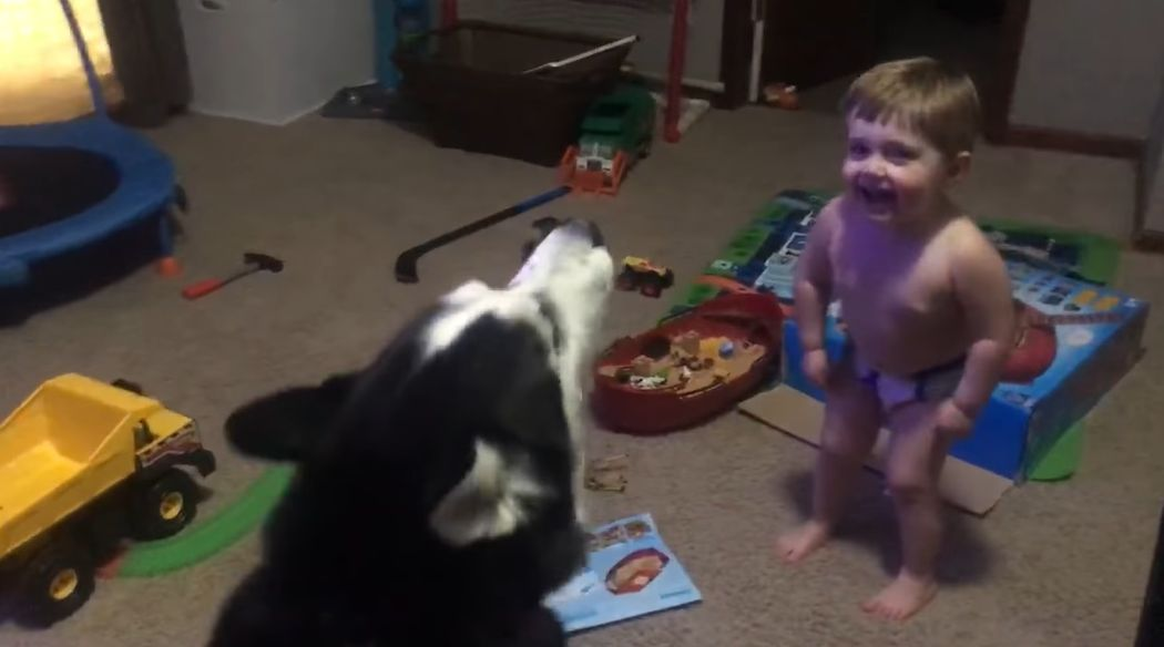 boy howls with husky