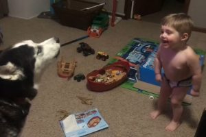 VIDEO: Adorable 'Howl Off' of 2-Year-Old Boy and His Dog Goes Viral