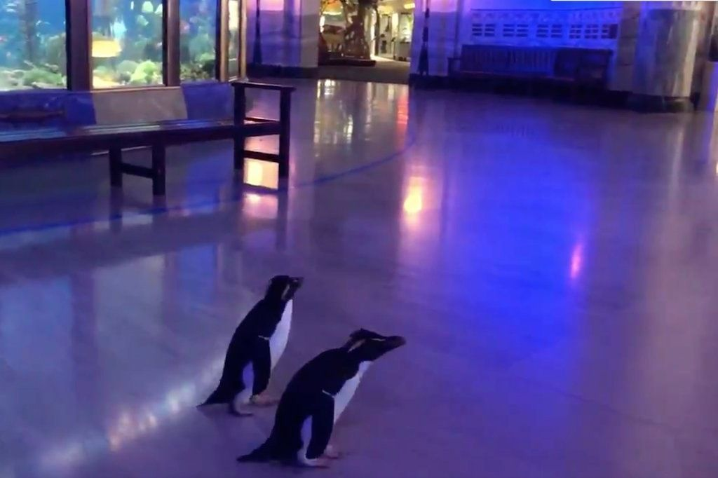 penguins field trip