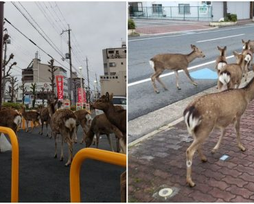 With People in Lockdown, Wild Animals Seen Roaming the City Streets