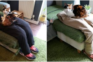 Busy Couple Tricks Their Super Clingy Cat with Fake Lap to Sit On