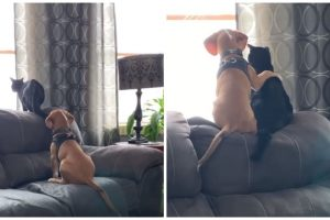 Adorable Video of Dog Hugging a Cat as They Go Birdwatching from the Couch Goes Viral