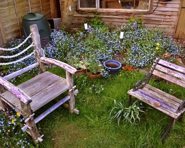 Creating the Garden of Your Dreams in 6 Easy Steps