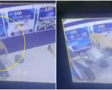 'Monkey Heist' Goes Viral as Monkey Ransacks ATM in India