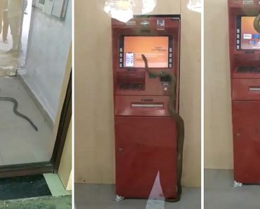 Snake 'Guards' ATM, Gets Inside Machine in Scary Viral Video