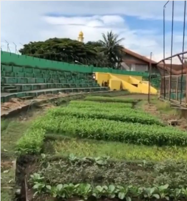 farmer converts football field