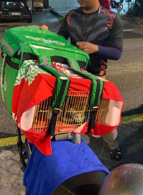 delivery rider brings pet cats
