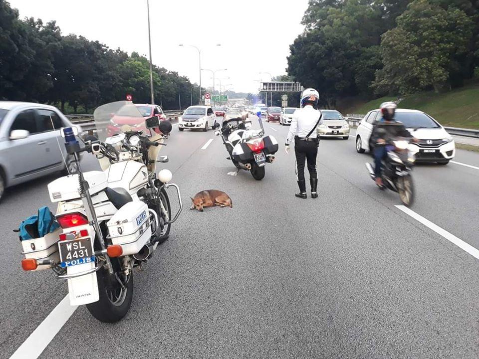 cops praise saving injured dog
