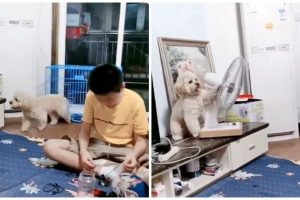 Sneaky Dog Turns Electric Fan to Face Its Cage on Hot Day