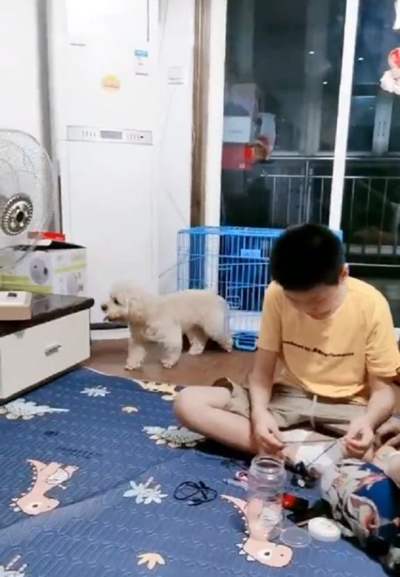 dog turns electric fan