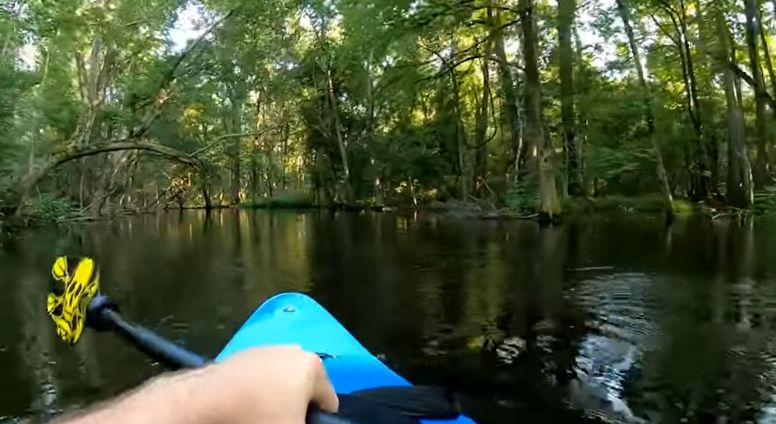 angry alligator slamming kayak