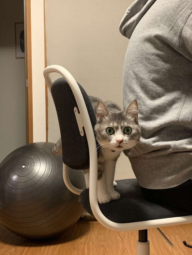 cat claims new chair