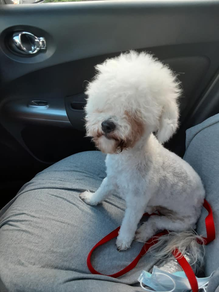 dog with hilarious haircut