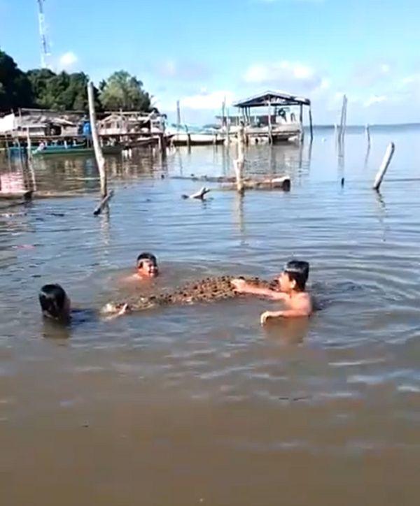 kids swimming with crocodile