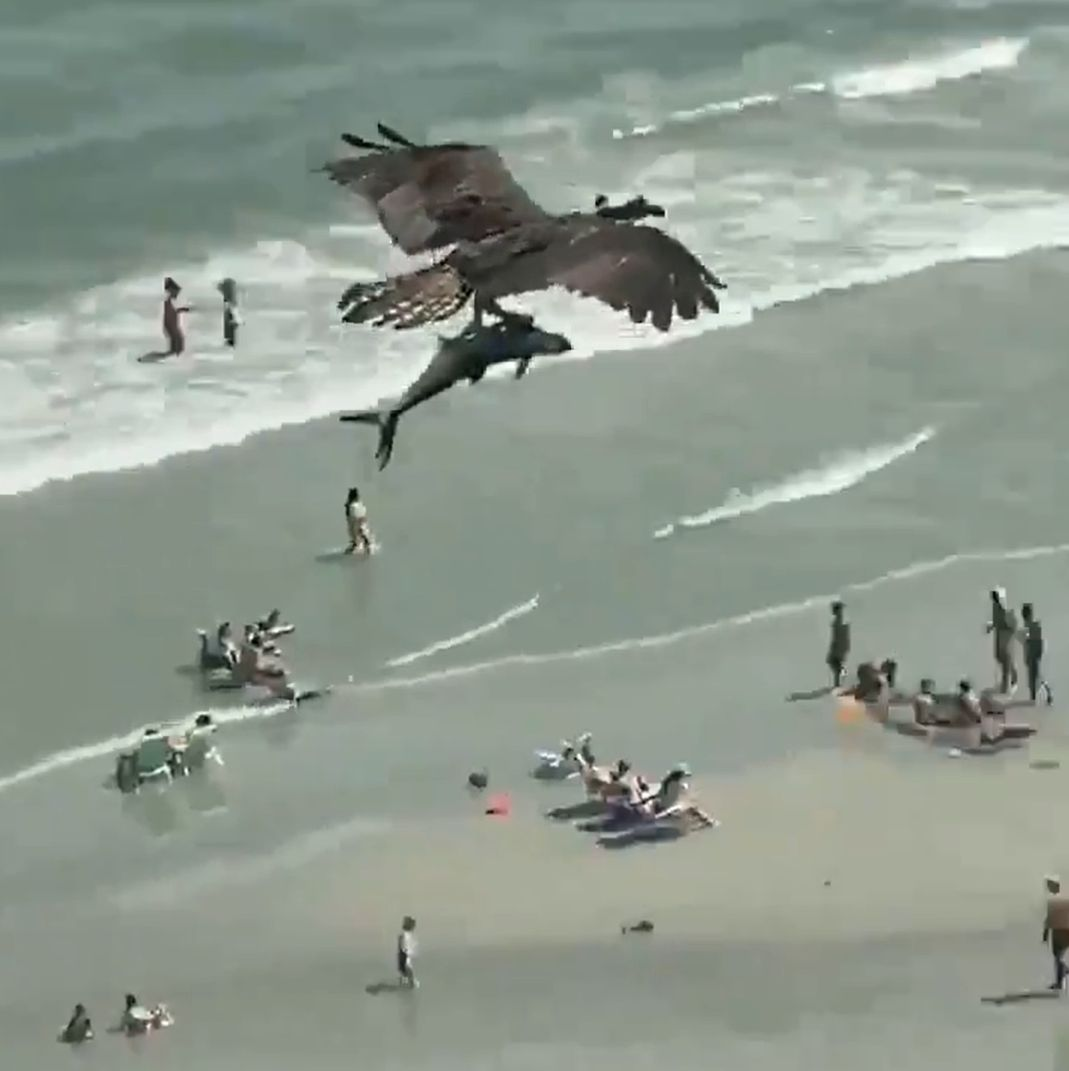bird carrying shark