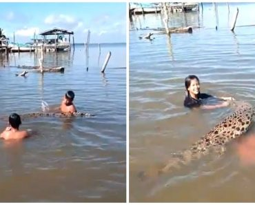 Kids Go Viral for Swimming with Crocodile at the Beach