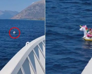 Girl on Inflatable Unicorn Gets Rescued by Ship about 1 Mile from Shore
