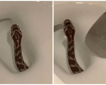 Man Shares Scary Video of Snake Coming Out of Friend's Toilet Bowl