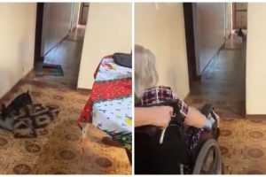 Thoughtful Dog Moves Rugs to Make Way for Grandma's Wheelchair