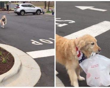 Adorable Dog Goes Viral for Picking Up Owner's Order from Restaurant