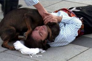 Stray Dog Interrupts Street Performance to Comfort 'Injured' Actor on the Ground