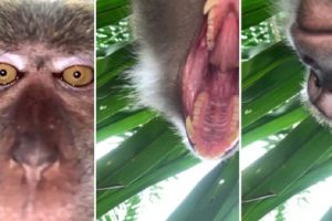 Monkey Takes Hilarious Selfies After Snatching Phone from Guy's Room